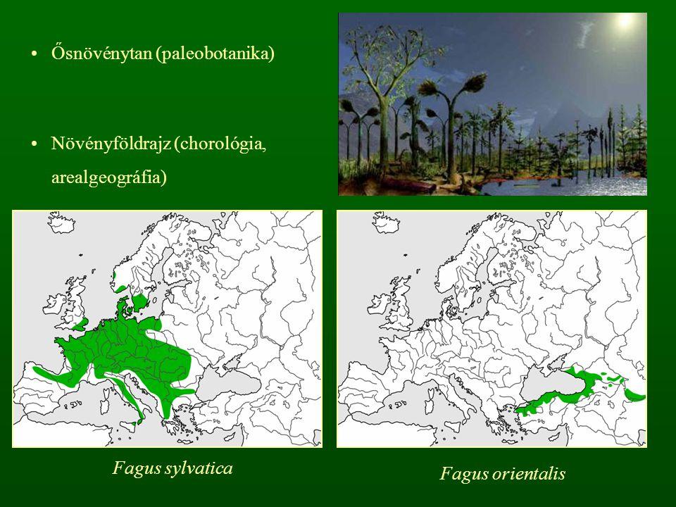 Ősnövénytan (paleobotanika) Növényföldrajz (chorológia, arealgeográfia) Fagus sylvatica Fagus orientalis