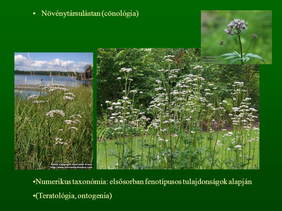 Növénytársulástan (cönológia) Numerikus taxonómia: elsősorban fenotípusos tulajdonságok alapján (Teratológia, ontogenia)