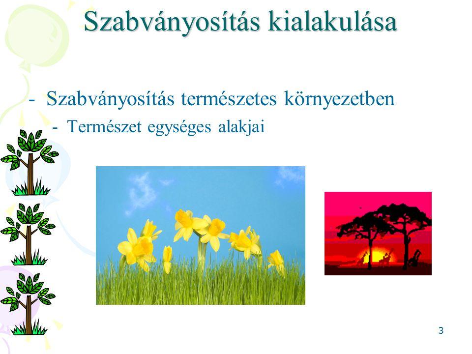3 Szabványosítás kialakulása -Szabványosítás természetes környezetben -Természet egységes alakjai