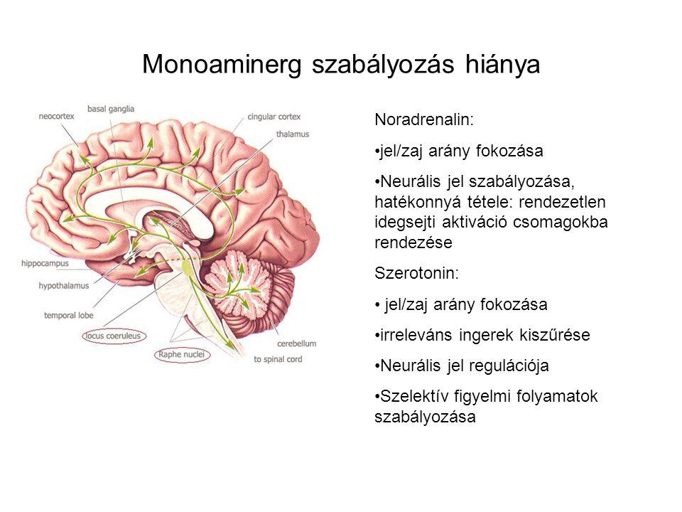 Monoaminerg szabályozás hiánya Noradrenalin: jel/zaj arány fokozása Neurális jel szabályozása, hatékonnyá tétele: rendezetlen idegsejti aktiváció csom