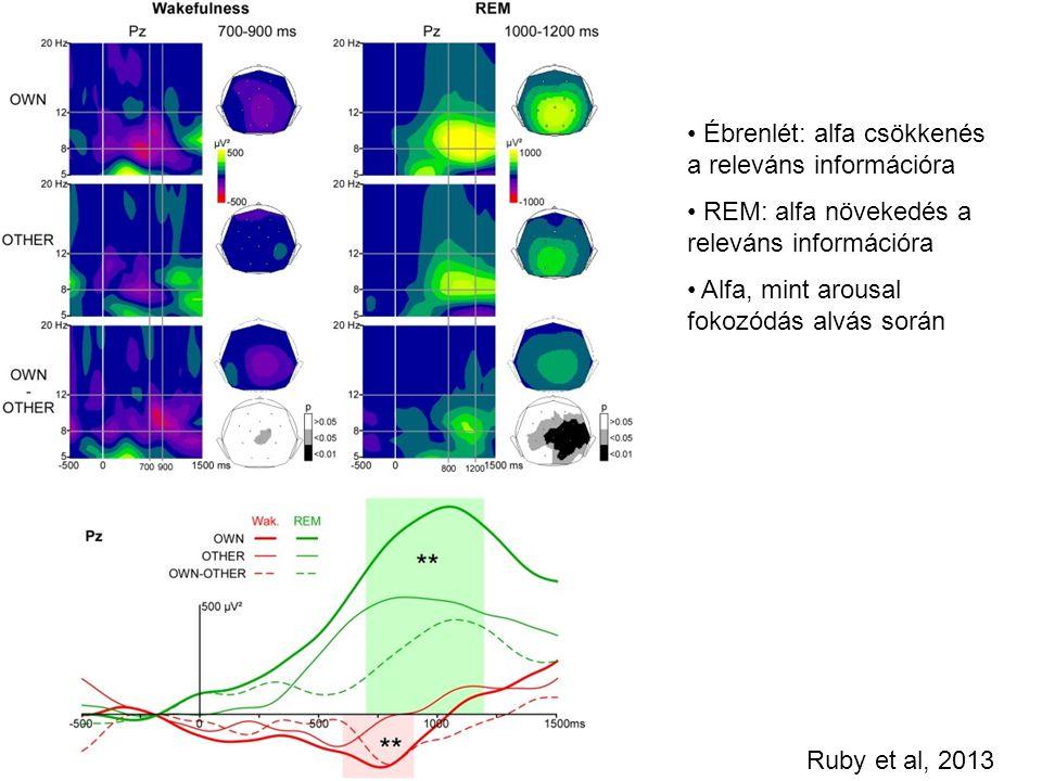 Ébrenlét: alfa csökkenés a releváns információra REM: alfa növekedés a releváns információra Alfa, mint arousal fokozódás alvás során Ruby et al, 2013