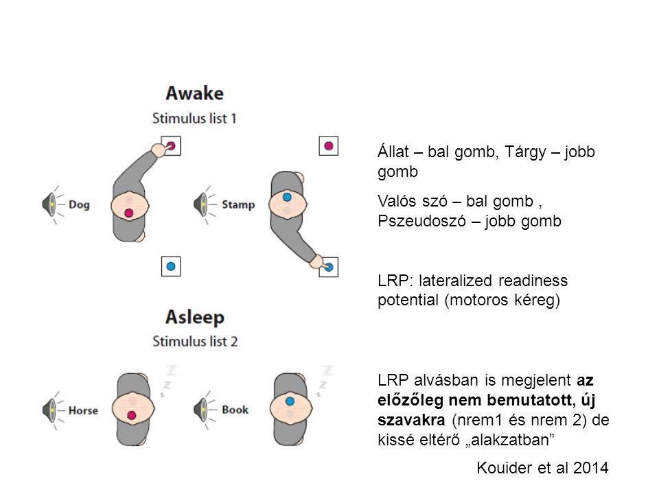 Kouider et al 2014 Állat – bal gomb, Tárgy – jobb gomb Valós szó – bal gomb, Pszeudoszó – jobb gomb LRP: lateralized readiness potential (motoros kére