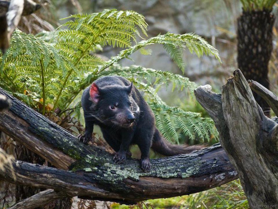 Tasmánia méretében kb.akkora mint Írország, de összesen mindössze 5-600 ezer lakosa van.