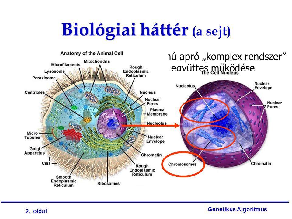 """2. oldal Genetikus Algoritmus Minden biológiai sejt nagy számú apró """"komplex rendszer"""" (termelő-, fogyasztó egységek) együttes működése Melynek a sejt"""