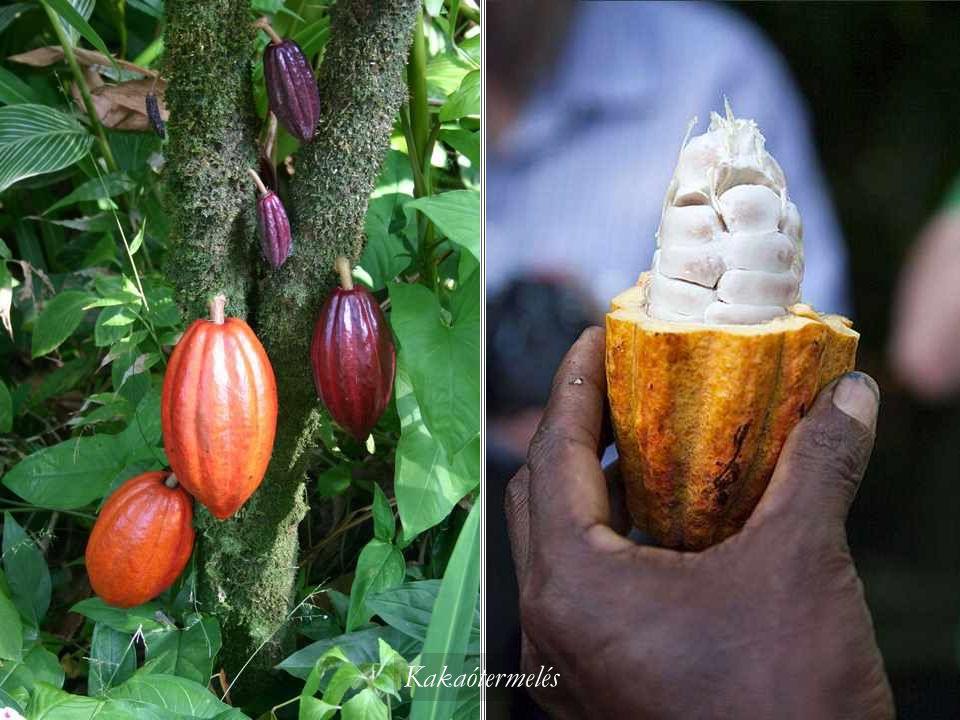 Rák és a kókuszdió