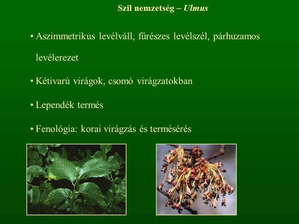 Szil nemzetség – Ulmus Aszimmetrikus levélváll, fűrészes levélszél, párhuzamos levélerezet Kétivarú virágok, csomó virágzatokban Lependék termés Fenol