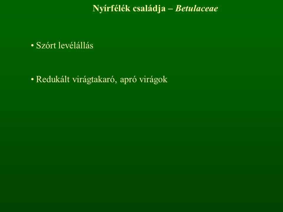 Nyírfélék családja – Betulaceae Szórt levélállás Redukált virágtakaró, apró virágok