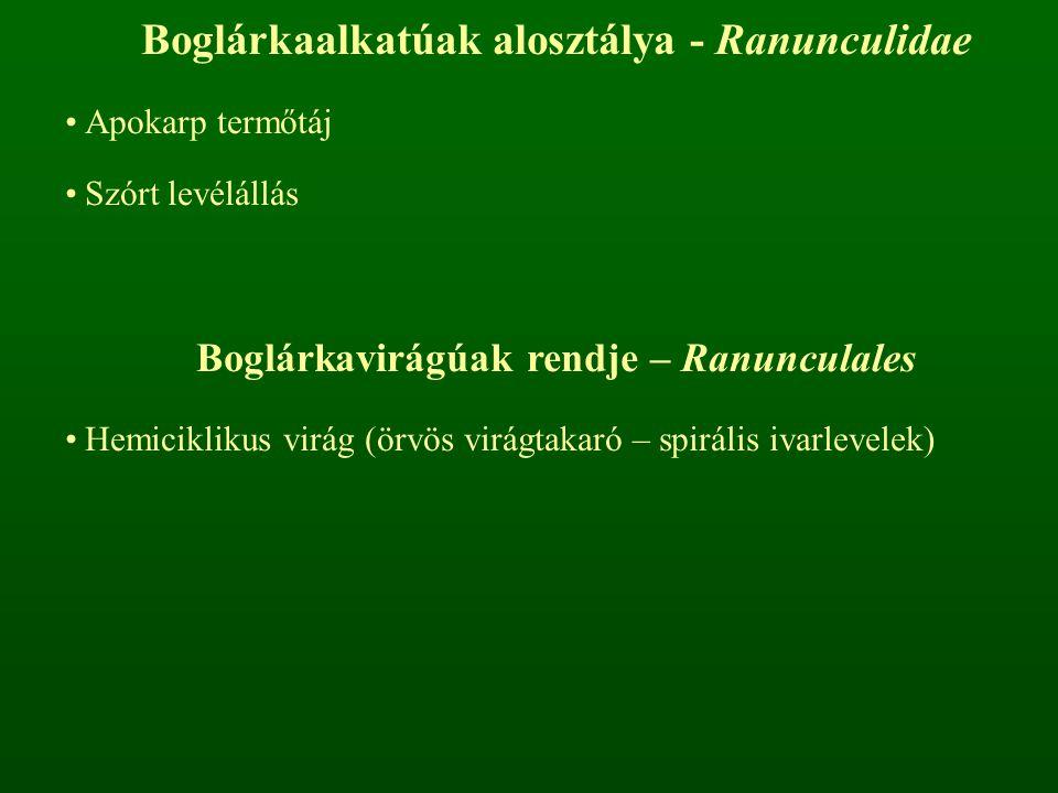 Boglárkafélék családja – Ranunculaceae virágtakaró: P 3+3 vagy P 2+2 vagy K 5 C 5 ivarlevelek felépítése: A ∞ G ∞ Apokarp termőtáj Sok porzó, nektáriumokká módosulhatnak Aszmag vagy tüsző terméscsoport Iszalag nemzetség – Clematis Fás képviselői liánok keresztben átellenes levélállás Összetett levelek P 2+2 Aszmag terméscsoport