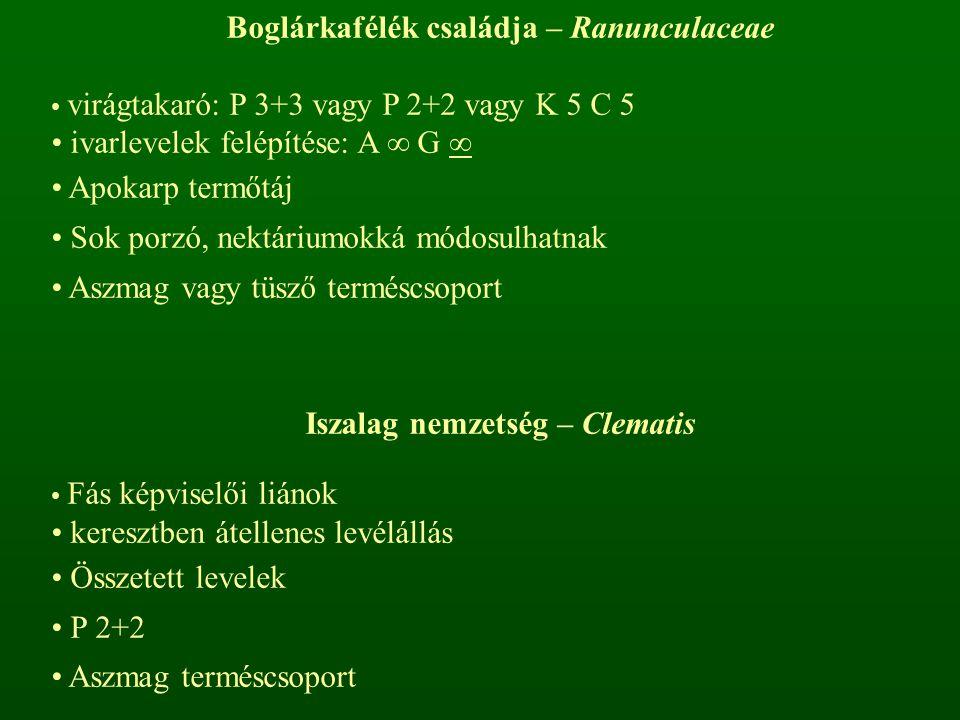Boglárkafélék családja – Ranunculaceae virágtakaró: P 3+3 vagy P 2+2 vagy K 5 C 5 ivarlevelek felépítése: A ∞ G ∞ Apokarp termőtáj Sok porzó, nektáriu