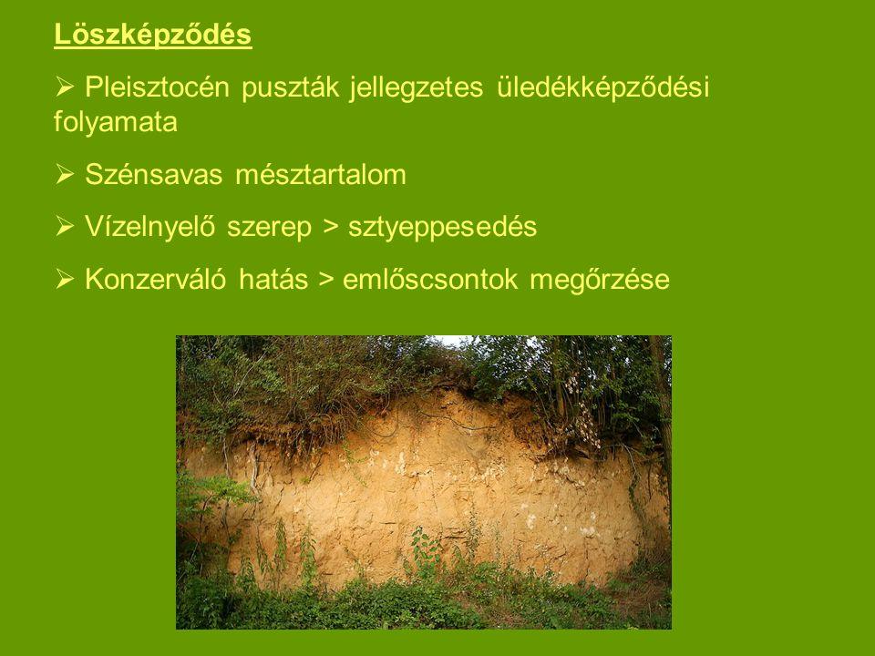 Löszképződés  Pleisztocén puszták jellegzetes üledékképződési folyamata  Szénsavas mésztartalom  Vízelnyelő szerep > sztyeppesedés  Konzerváló hat