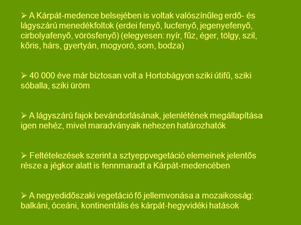  A Kárpát-medence belsejében is voltak valószínűleg erdő- és lágyszárú menedékfoltok (erdei fenyő, lucfenyő, jegenyefenyő, cirbolyafenyő, vörösfenyő)