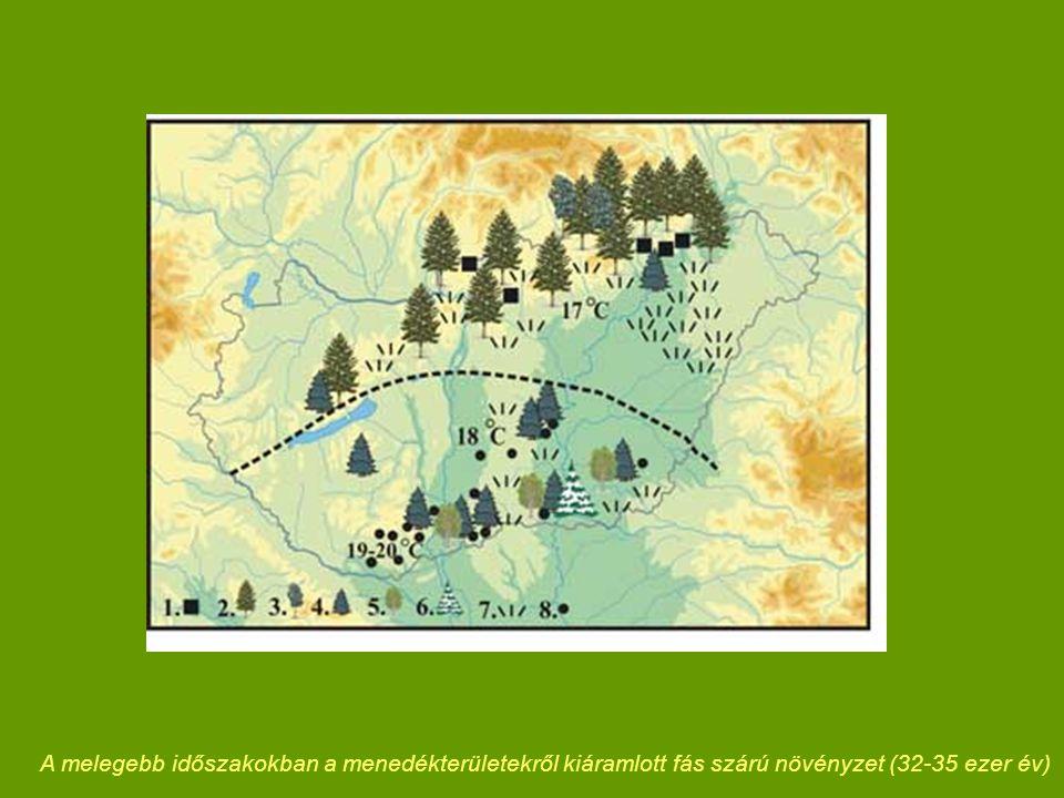 A melegebb időszakokban a menedékterületekről kiáramlott fás szárú növényzet (32-35 ezer év)