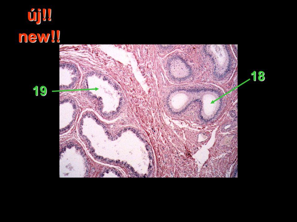 53.Melyik rendszer vezérli a szerv működését. Which system regulates the function of the organ.