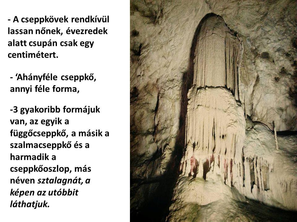 - A cseppkövek rendkívül lassan nőnek, évezredek alatt csupán csak egy centimétert.