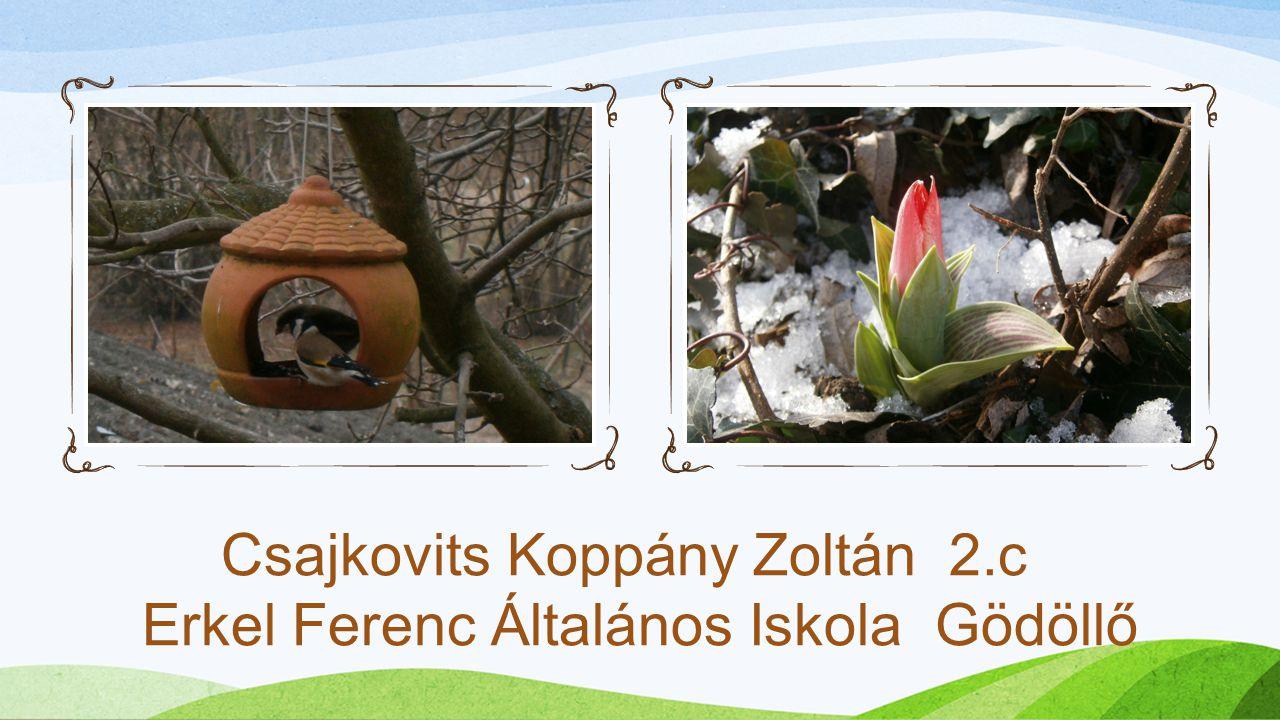 Csajkovits Koppány Zoltán 2.c Erkel Ferenc Általános Iskola Gödöllő