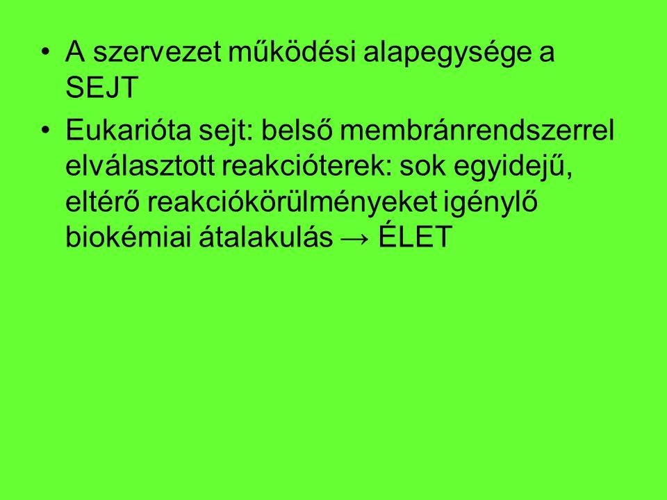 A szervezet működési alapegysége a SEJT Eukarióta sejt: belső membránrendszerrel elválasztott reakcióterek: sok egyidejű, eltérő reakciókörülményeket