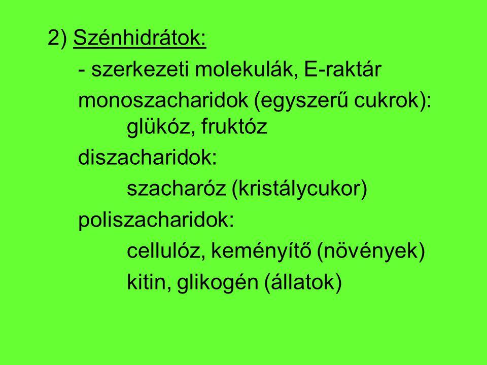 2) Szénhidrátok: - szerkezeti molekulák, E-raktár monoszacharidok (egyszerű cukrok): glükóz, fruktóz diszacharidok: szacharóz (kristálycukor) poliszac