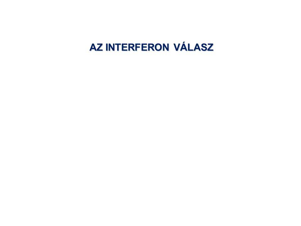 AZ INTERFERON VÁLASZ