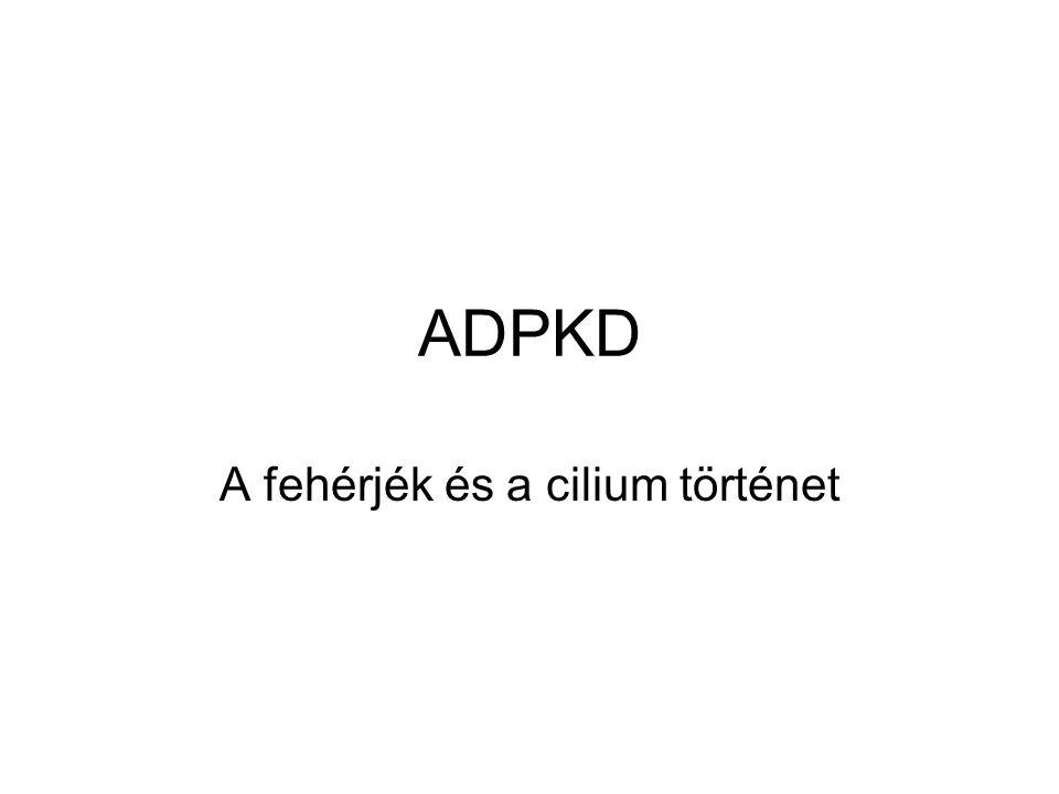 ADPKD A fehérjék és a cilium történet