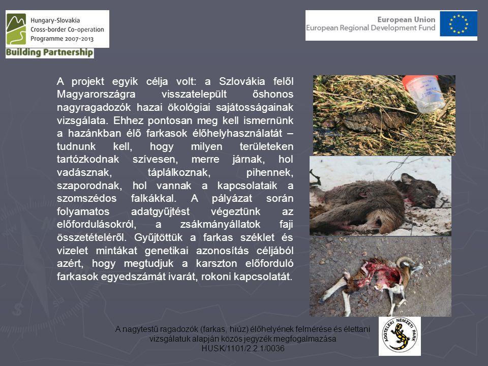 A nagytestű ragadozók (farkas, hiúz) élőhelyének felmérése és élettani vizsgálatuk alapján közös jegyzék megfogalmazása HUSK/1101/2.2.1/0036 A projekt egyik célja volt: a Szlovákia felől Magyarországra visszatelepült őshonos nagyragadozók hazai ökológiai sajátosságainak vizsgálata.