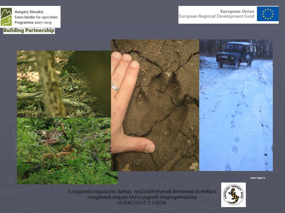 A nagytestű ragadozók (farkas, hiúz) élőhelyének felmérése és élettani vizsgálatuk alapján közös jegyzék megfogalmazása HUSK/1101/2.2.1/0036 Fotók: Szabó Á.