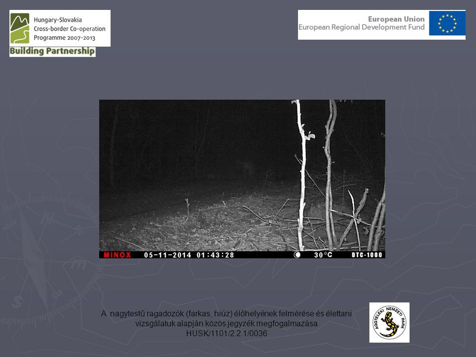 A nagytestű ragadozók (farkas, hiúz) élőhelyének felmérése és élettani vizsgálatuk alapján közös jegyzék megfogalmazása HUSK/1101/2.2.1/0036