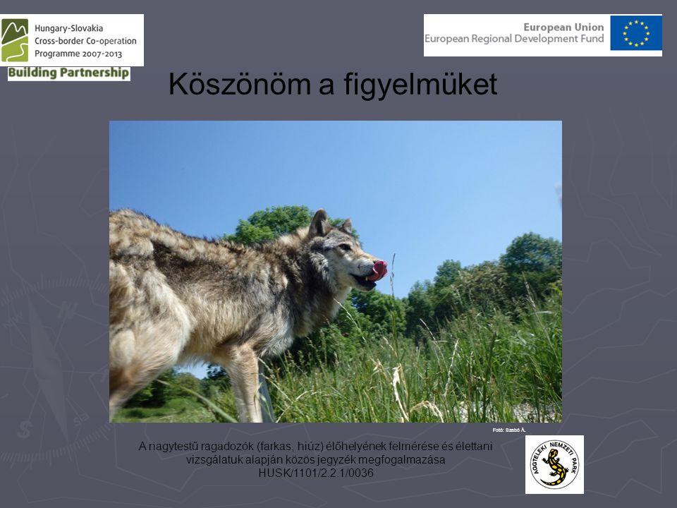 A nagytestű ragadozók (farkas, hiúz) élőhelyének felmérése és élettani vizsgálatuk alapján közös jegyzék megfogalmazása HUSK/1101/2.2.1/0036 Köszönöm a figyelmüket Fotó: Szabó Á.