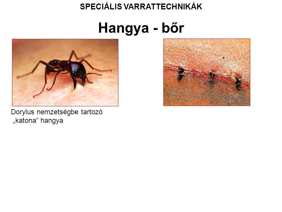 """SPECIÁLIS VARRATTECHNIKÁK Dorylus nemzetségbe tartozó """"katona hangya Hangya - bőr"""