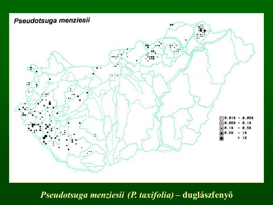 Pseudotsuga menziesii (P. taxifolia) – duglászfenyő