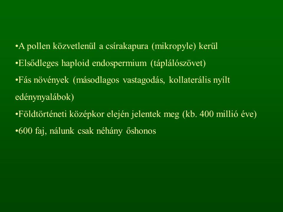 """Toboztermők osztálya – Coniferopsida Örökzöld fák, tű- vagy pikkelylevelekkel Különnemű """"virágzatok A magkezdemények megfásodó fellevelek (fedőpikkely, meddő pikkely) tövében helyezkednek el toboz A termőlevelek termőpikkelyekké forrnak össze"""