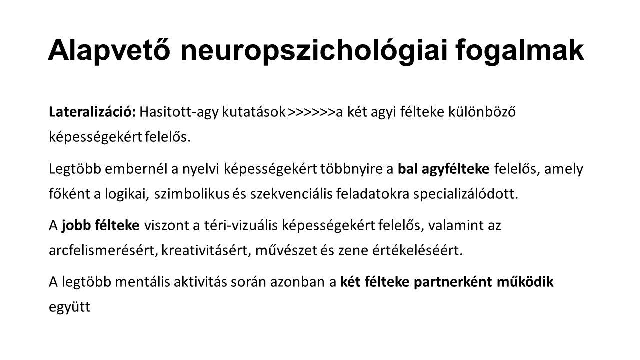 Alapvető neuropszichológiai fogalmak Lateralizáció: Hasitott-agy kutatások >>>>>>a két agyi félteke különböző képességekért felelős. Legtöbb embernél