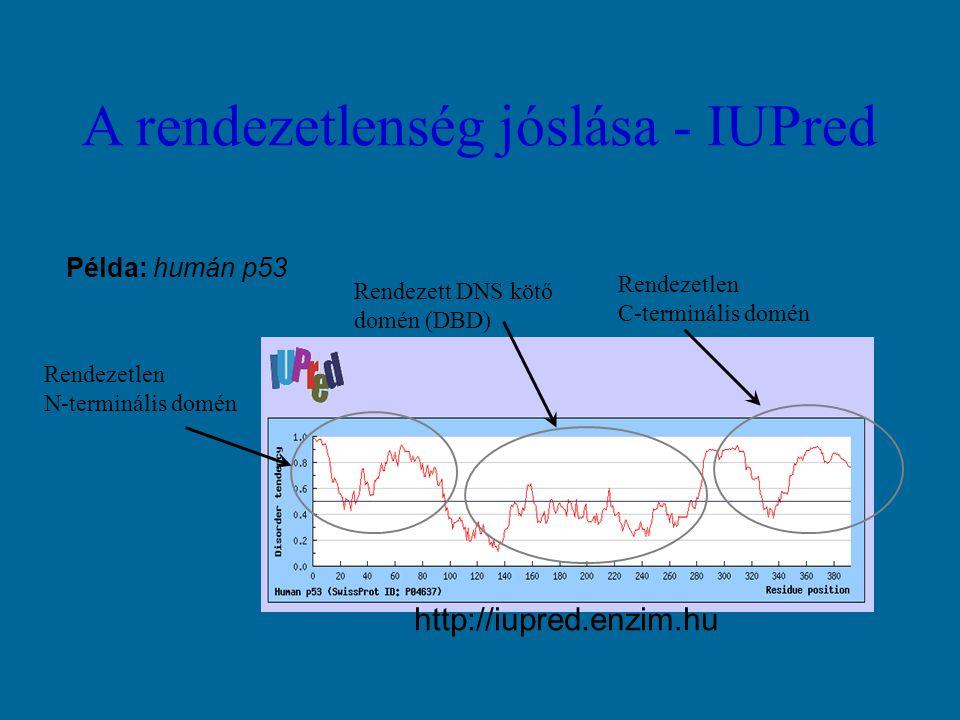 A rendezetlenség jóslása - IUPred Példa: humán p53 Rendezett DNS kötő domén (DBD) Rendezetlen C-terminális domén Rendezetlen N-terminális domén http://iupred.enzim.hu