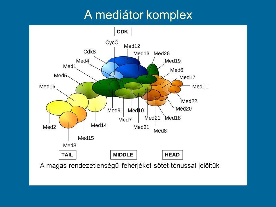 A mediátor komplex A magas rendezetlenségű fehérjéket sötét tónussal jelöltük