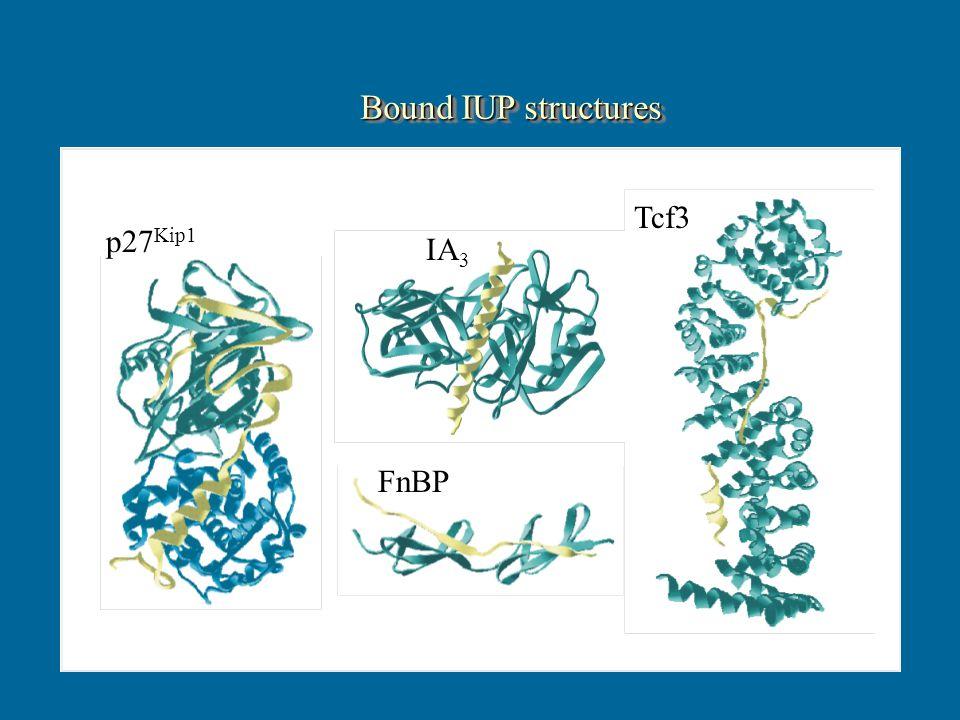 p27 Kip1 IA 3 FnBP Tcf3 Bound IUP structures