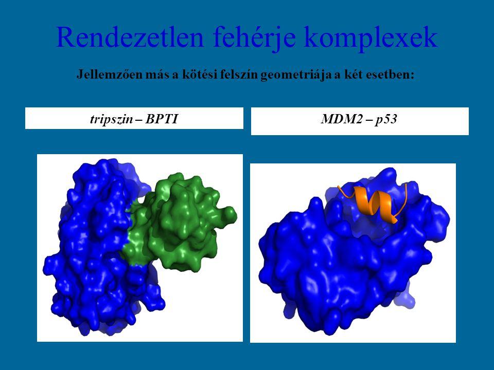 Jellemzően más a kötési felszín geometriája a két esetben: tripszin – BPTI Rendezetlen fehérje komplexek MDM2 – p53