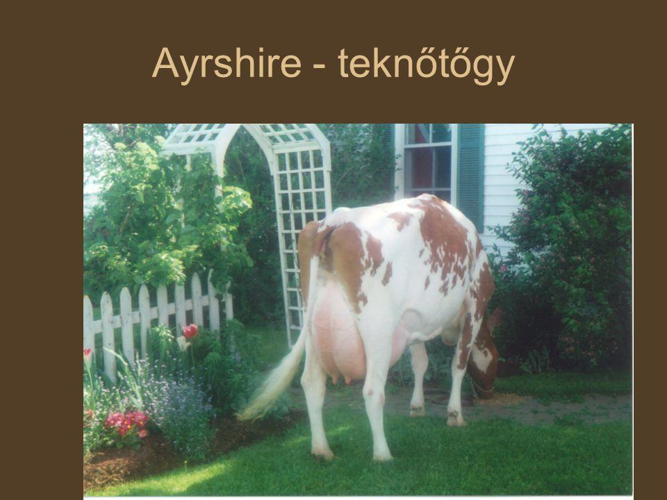 Ayrshire - teknőtőgy
