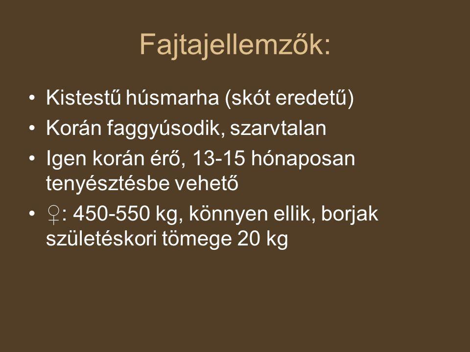 Fajtajellemzők: Kistestű húsmarha (skót eredetű) Korán faggyúsodik, szarvtalan Igen korán érő, 13-15 hónaposan tenyésztésbe vehető ♀: 450-550 kg, könn