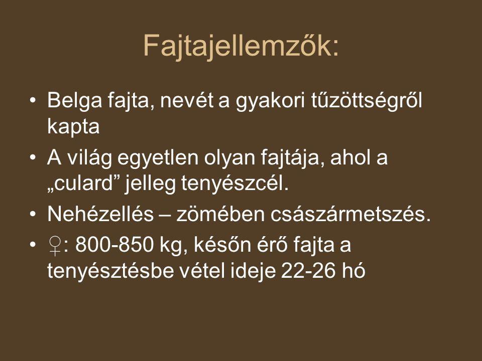 """Fajtajellemzők: Belga fajta, nevét a gyakori tűzöttségről kapta A világ egyetlen olyan fajtája, ahol a """"culard"""" jelleg tenyészcél. Nehézellés – zömébe"""