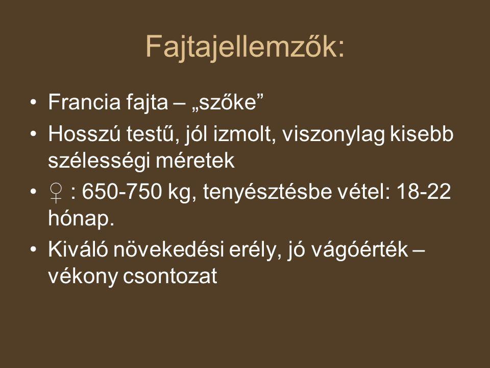 """Fajtajellemzők: Francia fajta – """"szőke"""" Hosszú testű, jól izmolt, viszonylag kisebb szélességi méretek ♀ : 650-750 kg, tenyésztésbe vétel: 18-22 hónap"""