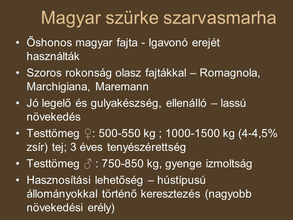 Őshonos magyar fajta - Igavonó erejét használták Szoros rokonság olasz fajtákkal – Romagnola, Marchigiana, Maremann Jó legelő és gulyakészség, ellenál