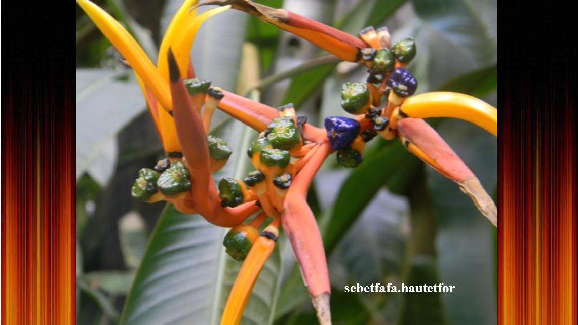 Hegyi harangláb - Ritka, védett virág
