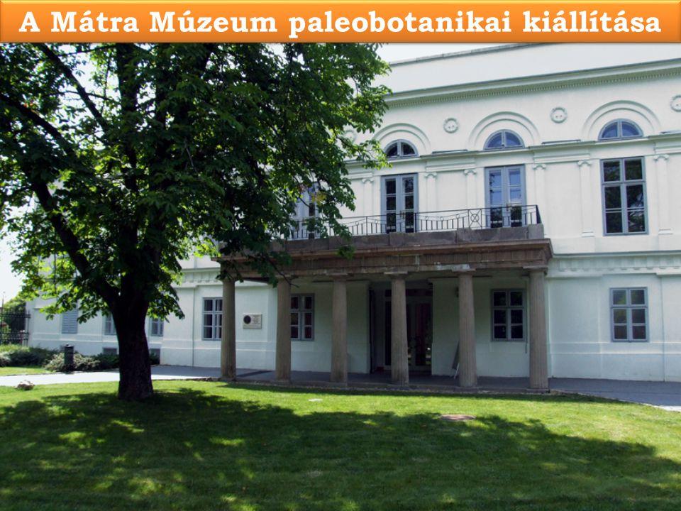 A Mátra Múzeum paleobotanikai kiállítása