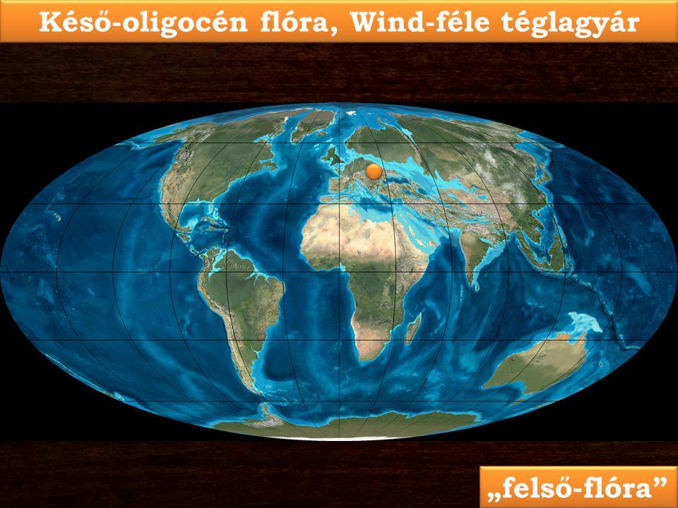"""Késő-oligocén flóra, Wind-féle téglagyár """"felső-flóra"""""""