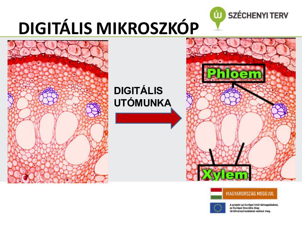 DIGITÁLIS MIKROSZKÓP DIGITÁLIS UTÓMUNKA
