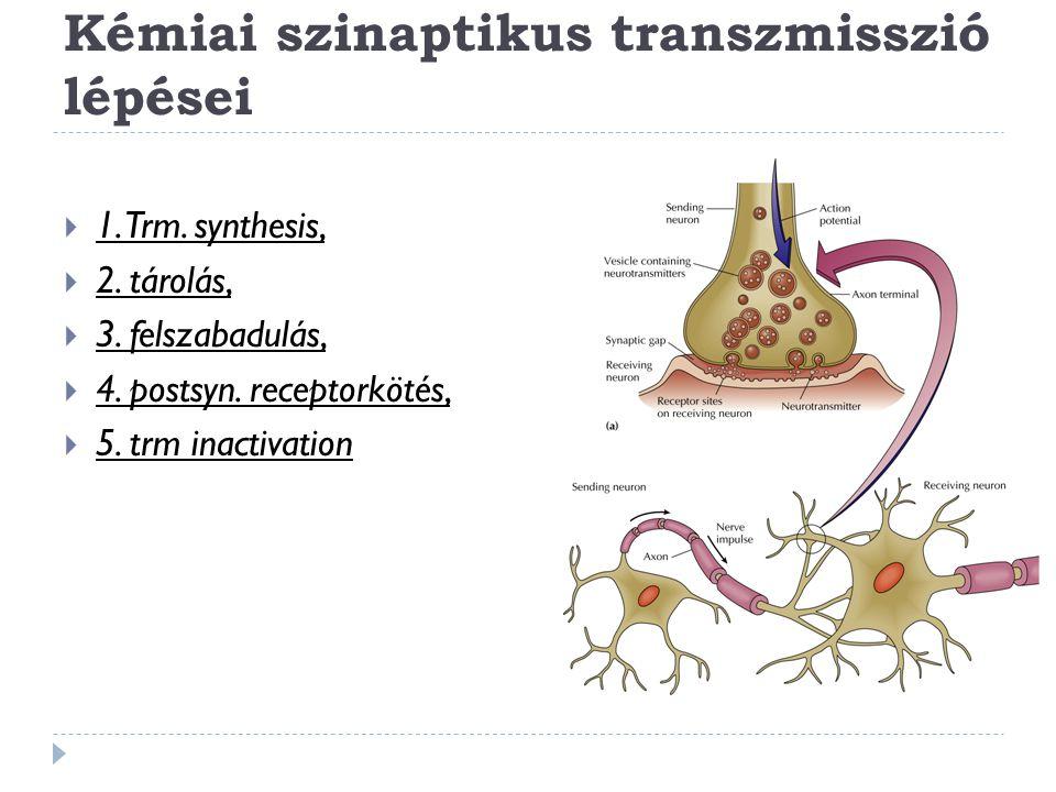 Kémiai szinaptikus transzmisszió lépései  1. Trm. synthesis,  2. tárolás,  3. felszabadulás,  4. postsyn. receptorkötés,  5. trm inactivation