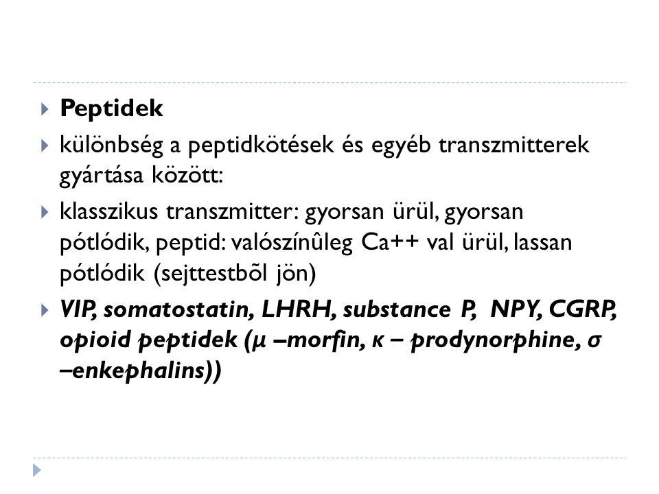  Peptidek  különbség a peptidkötések és egyéb transzmitterek gyártása között:  klasszikus transzmitter: gyorsan ürül, gyorsan pótlódik, peptid: val