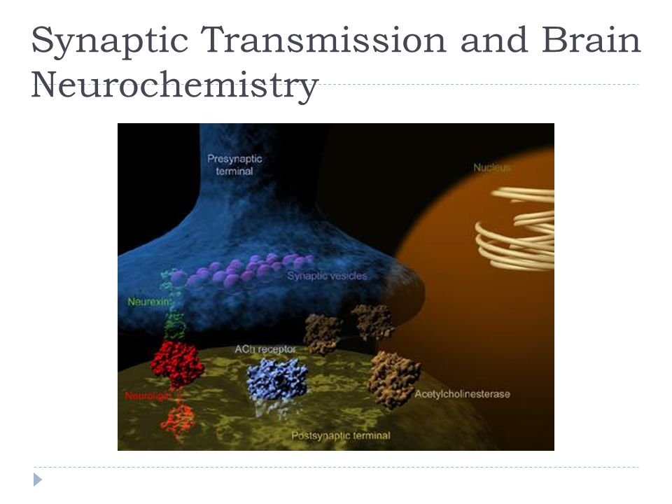 Synaptic Transmission and Brain Neurochemistry
