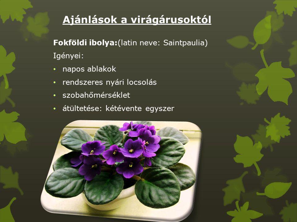 Ajánlások a virágárusoktól Fokföldi ibolya:(latin neve: Saintpaulia) Igényei: napos ablakok rendszeres nyári locsolás szobahőmérséklet átültetése: kétévente egyszer