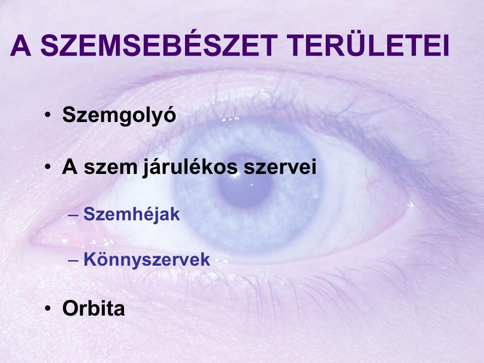A SZEMSEBÉSZET TERÜLETEI Szemgolyó A szem járulékos szervei –Szemhéjak –Könnyszervek Orbita