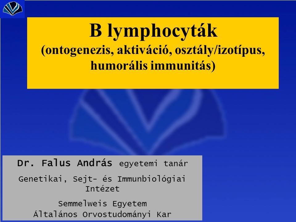 csontvelô perifériás nyirokszerv B elôalak érett B V-D-J/ V-J átrendezôdés ~2x10 7 B sejt/nap ag (~90%) + ag Th hatás szomatikus mutációk B memóriasejtek plazmasejt antitest (~ 10%) osztályváltás nincs aktivált B sejt vér, nyirok